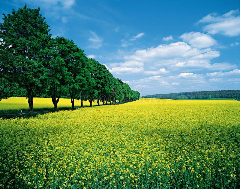 Frühling Felder u. allee lizenzfreie stockfotografie
