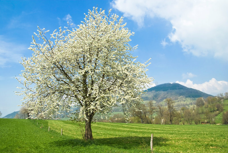 Frühling in Frankreich lizenzfreie stockfotografie