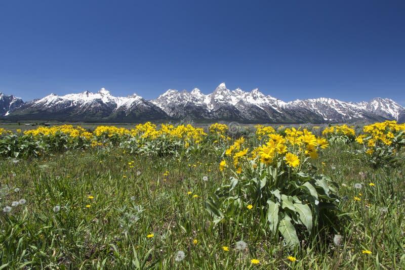 Frühling in großartigem Nationalpark Teton stockbild