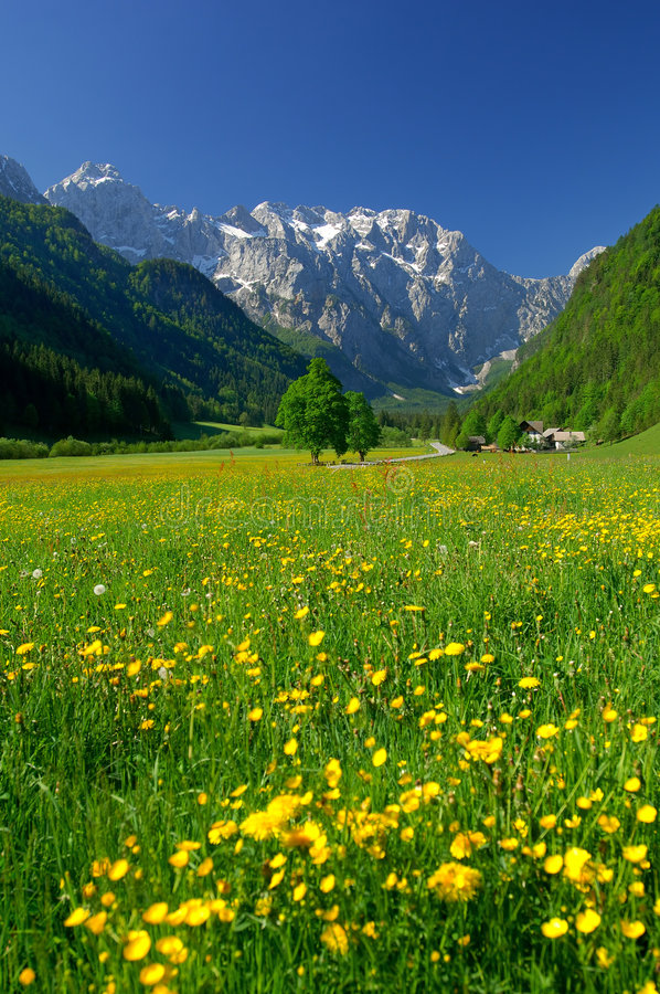 Frühling im alpinen Tal stockbilder