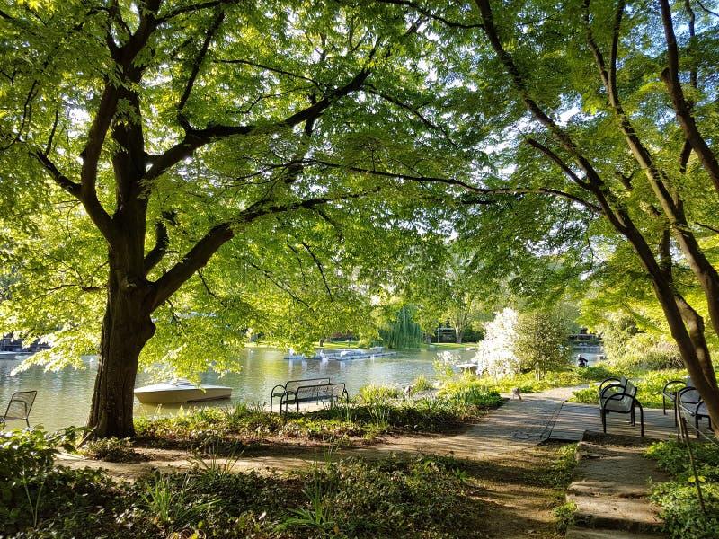 Frühling im Park stock images