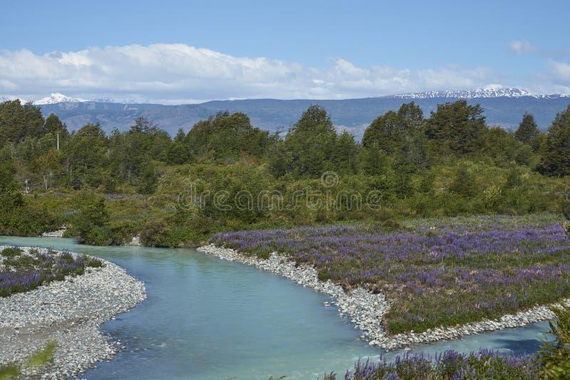 Frühling im Patagonia entlang dem Carretera Austral lizenzfreie stockfotos