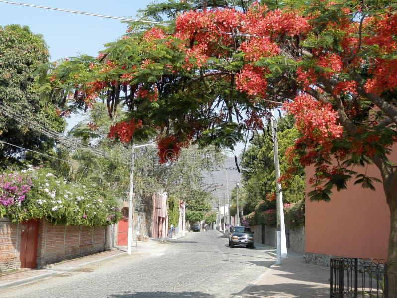 Frühling im See Chapala, Mexiko lizenzfreie stockbilder
