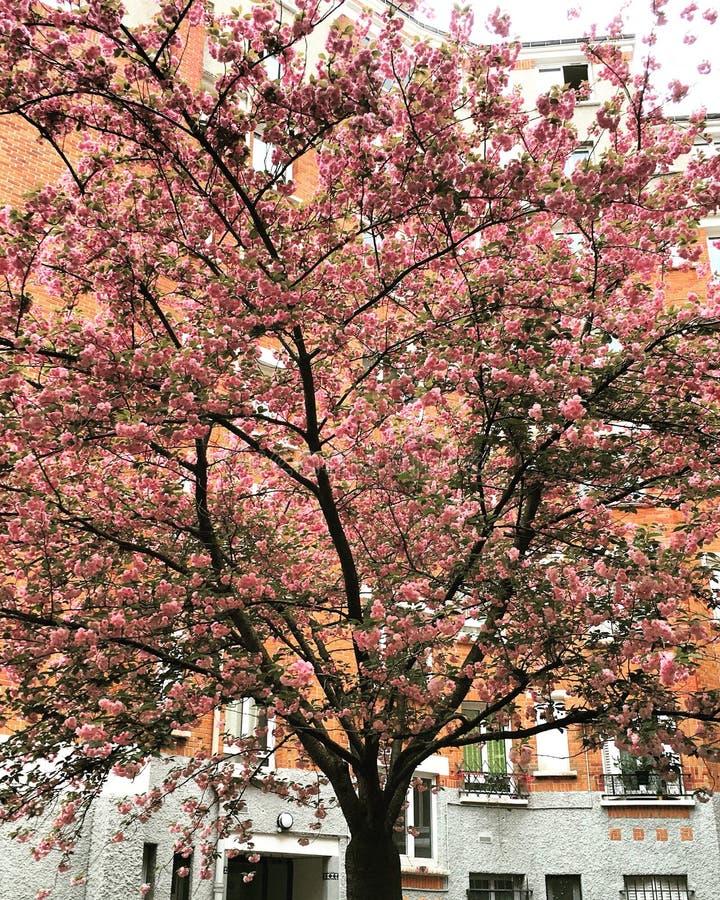Frühling ist überall lizenzfreie stockfotografie