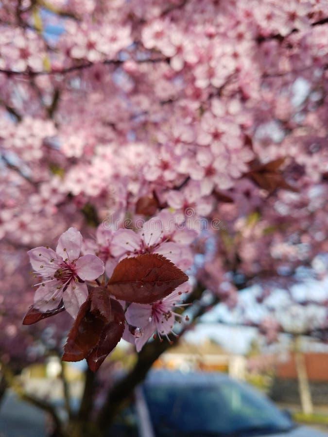 Frühling ist in der Luft stockbilder