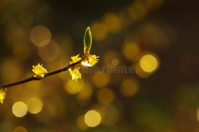 Frühling, Jahreszeit der Erneuerung stockfotos