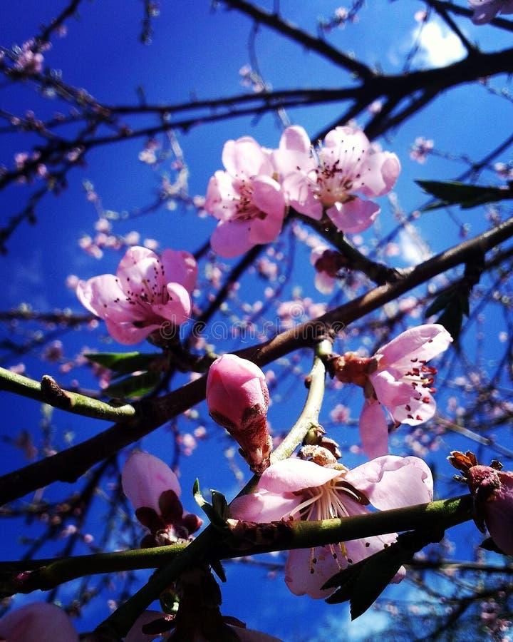 Frühling kam stockbilder