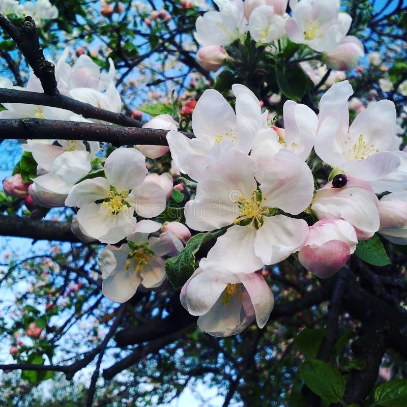 Frühling kam lizenzfreies stockbild