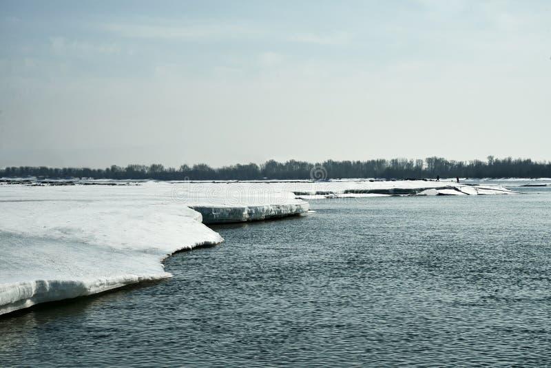 Frühling kommt in Sibirien Eiszerstampfungen auf dem Fluss, Baumstände ohne Blätter stockfotos