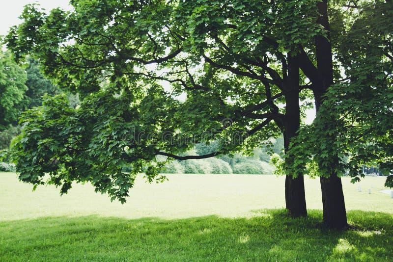 Frühling, Licht, warm, Blumen, Blume, Magie, Sommer, Park, Baum stockfotos
