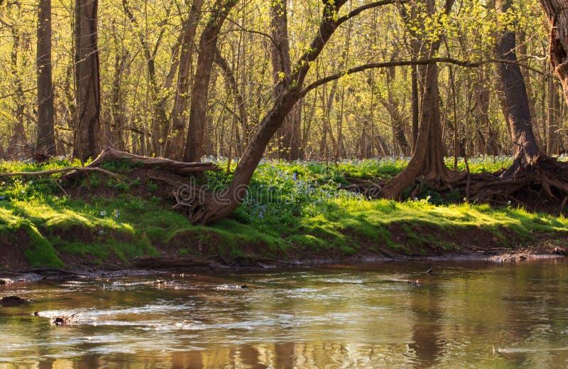 Frühling in Nord-Virginia lizenzfreies stockfoto