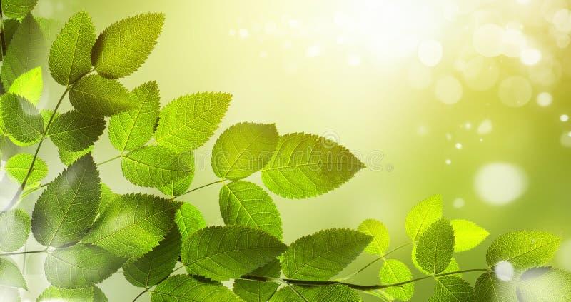 Frühling oder abstrakter Hintergrund des Sommers mit bokeh beleuchtet stockbilder