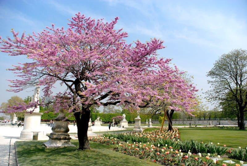 Frühling in Paris lizenzfreies stockbild