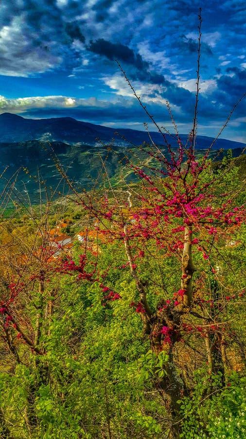 Frühling an seinem Besten im griechischen Dorf stockfotografie