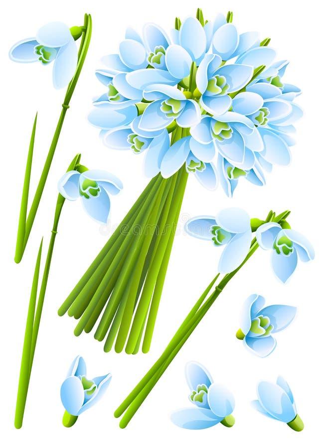 Frühling snowdrop Blumen stock abbildung