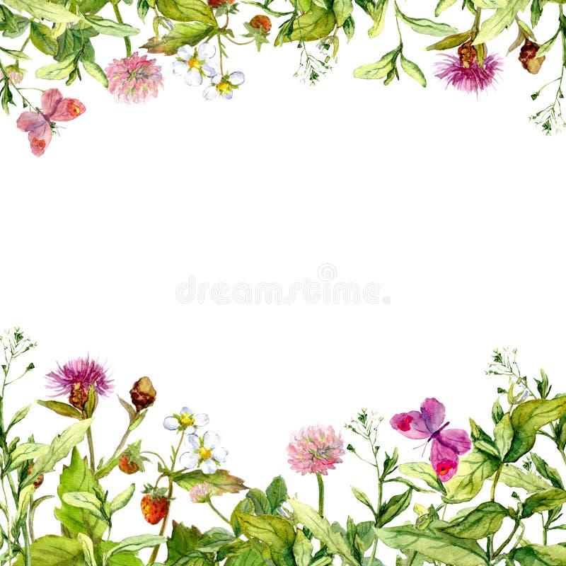 Frühling, Sommergarten: Blumen, Gras, Kräuter, Schmetterlinge Gelbe Blumen, Basisrecheneinheit, Inneres mit Tropfen watercolor lizenzfreies stockbild