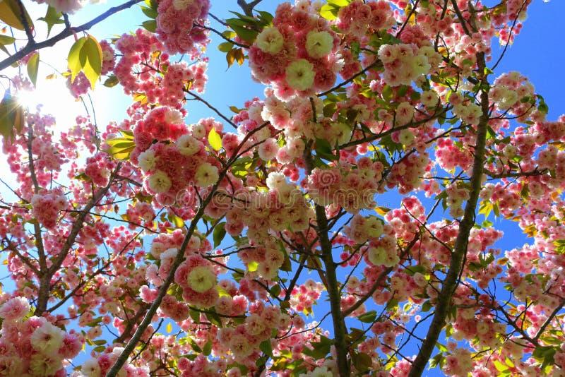 Frühling vives lizenzfreies stockbild