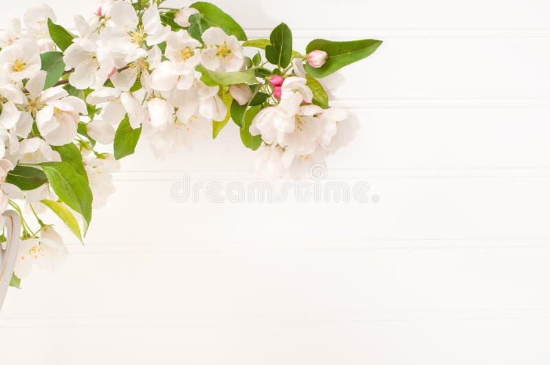 Frühling weißes Crabapple blüht Glied gegen weißes Brett-Wand-Hintergrund mit Raum oder Raum für Kopie, Text oder Ihre Wörter hor stockfoto