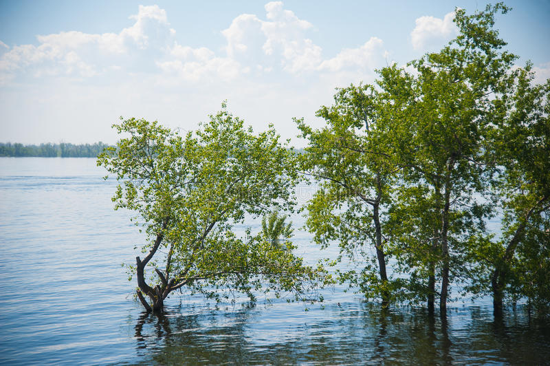 Frühlingsüberschwemmung auf dem Fluss lizenzfreie stockfotos