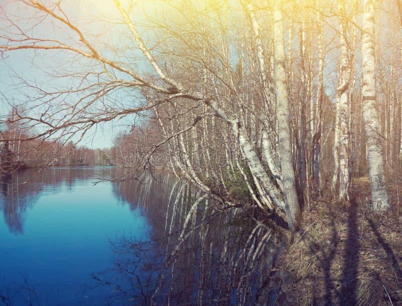 Frühlingsüberschwemmung auf dem Fluss stockbild