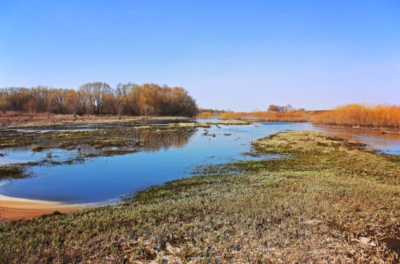 Frühlingsüberschwemmung auf dem Fluss Ist ein grünes Feld voll der Weizenanlagen stockfotografie