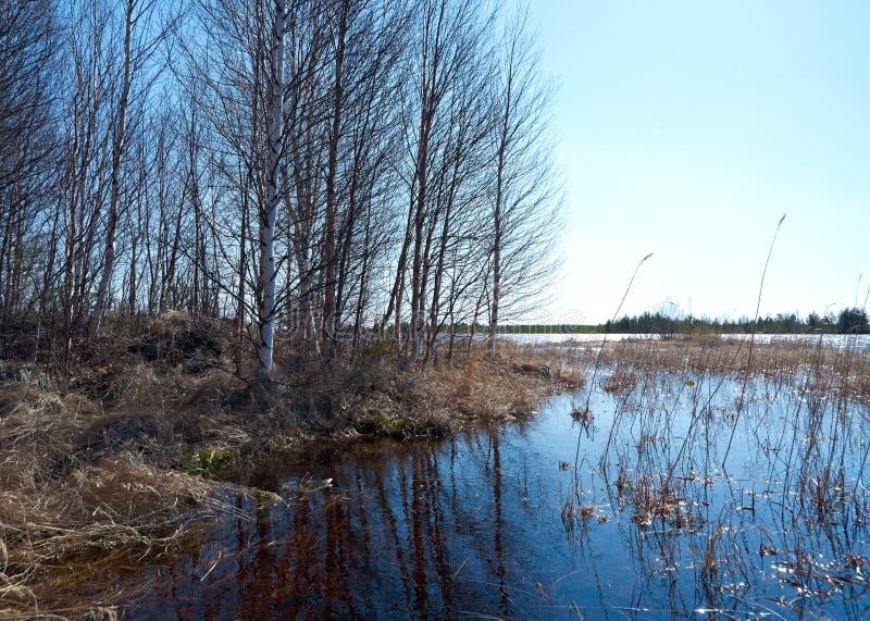 Frühlingsüberschwemmung auf dem See stockfotografie