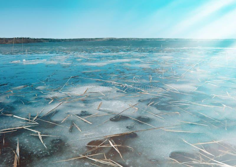 Frühlingsüberschwemmung auf dem See stockfotos