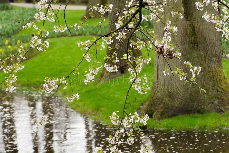 Frühlings-Baum-Blüte lizenzfreies stockfoto