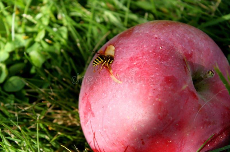 Frühlings-Biene stockbilder