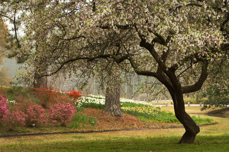 Frühlings-blühender Hartriegel-südliche Landschaft stockbild