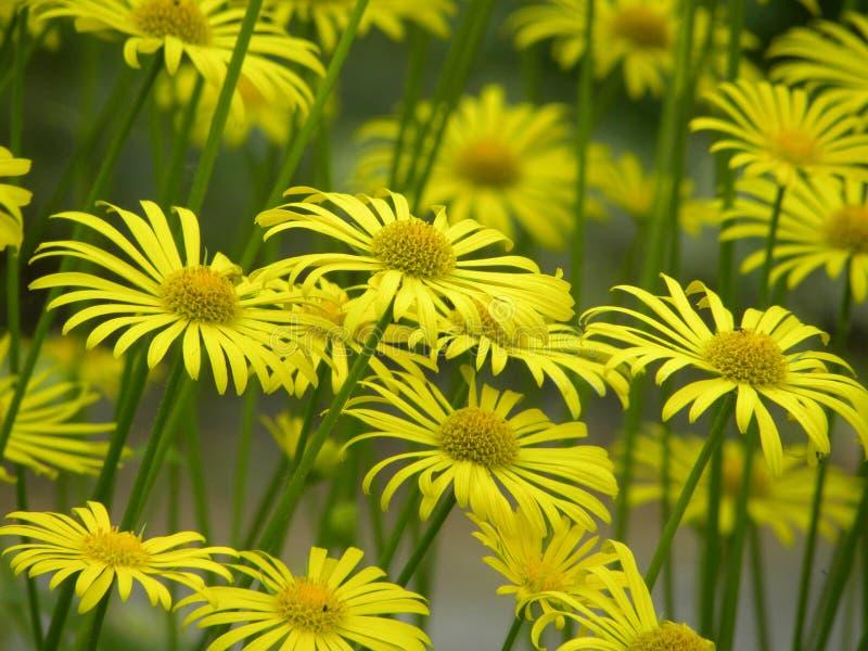 Frühlings-Blumen-Blühen stockfotos