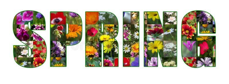 Frühlings-Blumen getrennt lizenzfreie abbildung