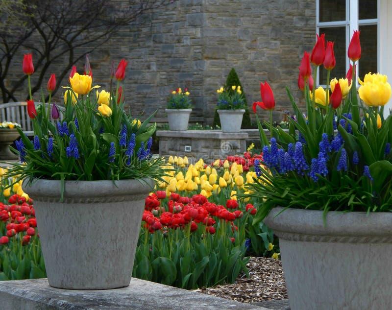 Frühlings-botanischer Garten stockfotos