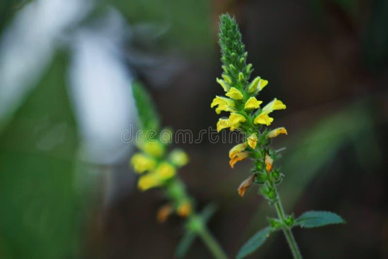 Frühlings-Dschungel-Blume lizenzfreie stockfotos