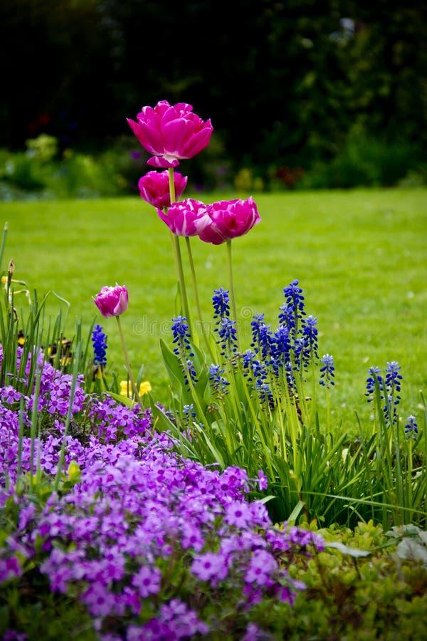 Frühlings-Farbe lizenzfreies stockfoto