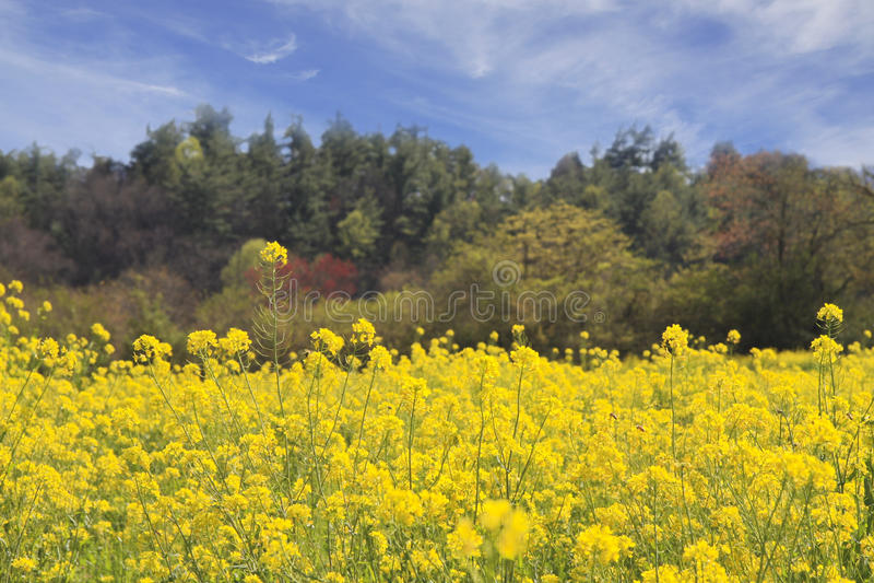 Frühlings-Feld der Blumen lizenzfreies stockfoto