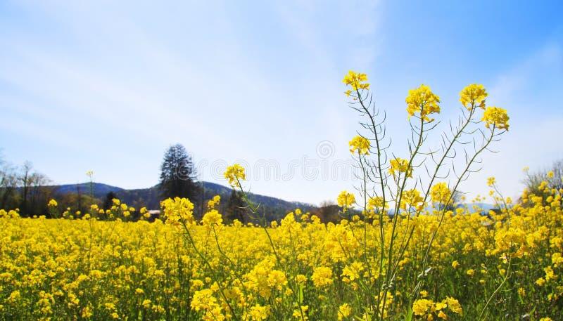 Frühlings-Feld-Landschaft stockbilder