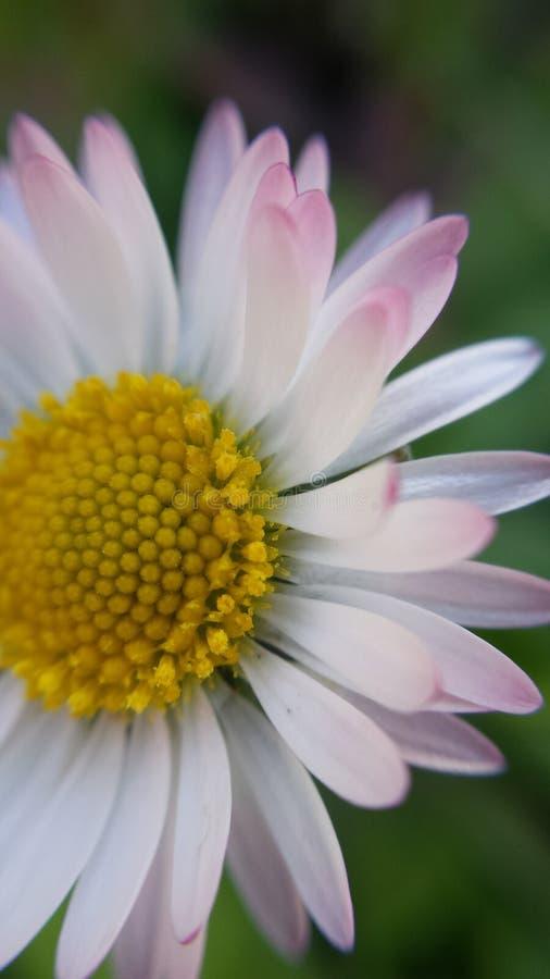 Frühlings-frische Blume stockbild
