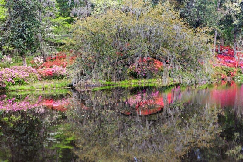 Frühlings-Garten-Wasser-Reflexionen lizenzfreies stockfoto