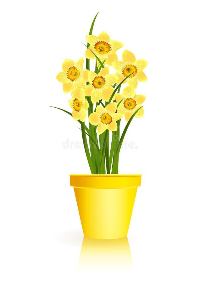 Frühlings-Gartenarbeit. Gelbe Narzissenblumen im Potenziometer stock abbildung
