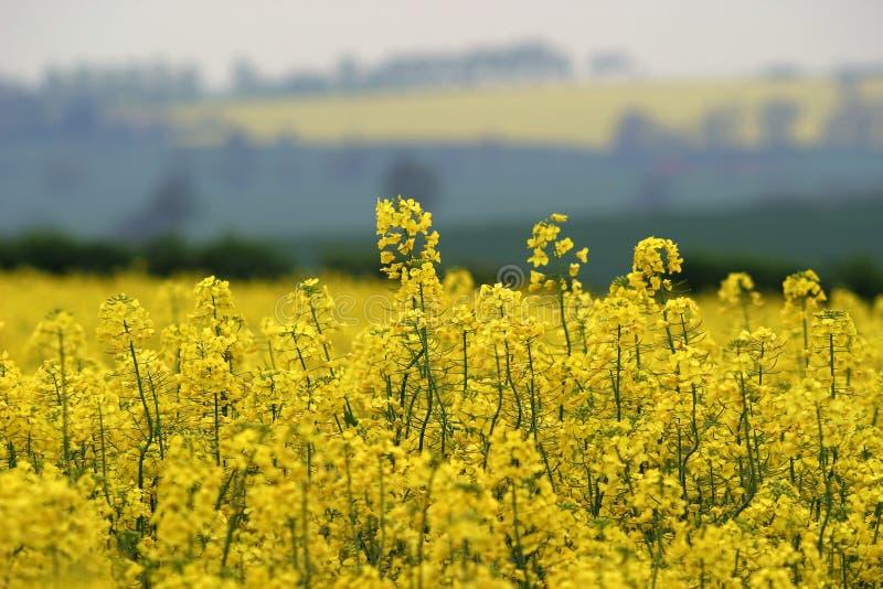 Frühlings-Gelb Lizenzfreies Stockbild