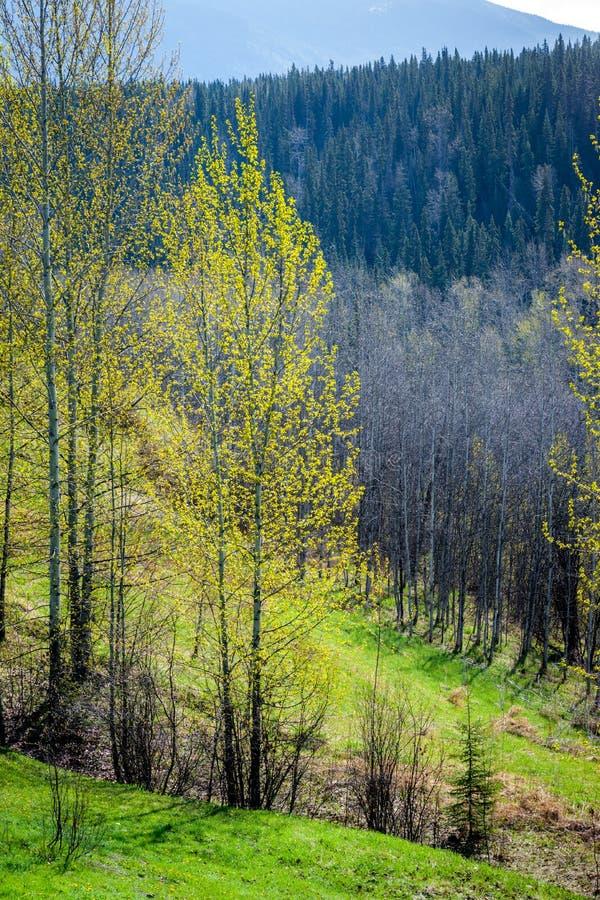 Frühlings-Grün - Blatt-Heraus stockfotos