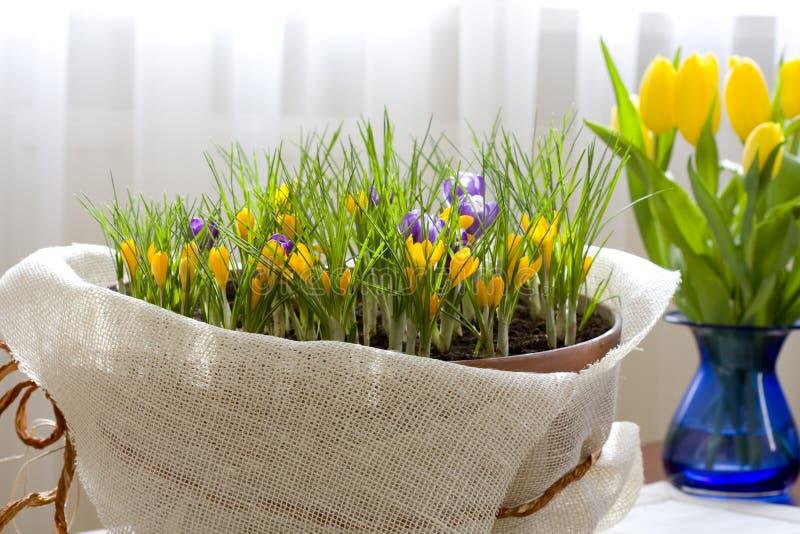 Frühlings-Krokus lizenzfreies stockfoto