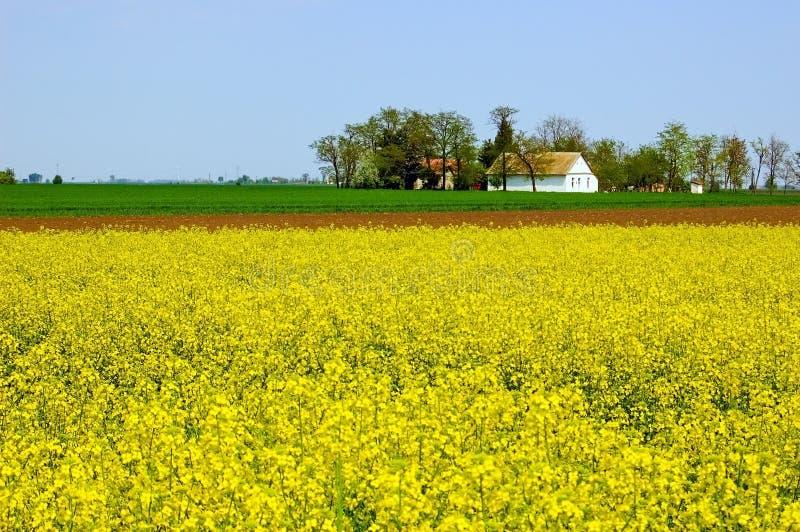 Frühlings-Landschaft lizenzfreie stockbilder