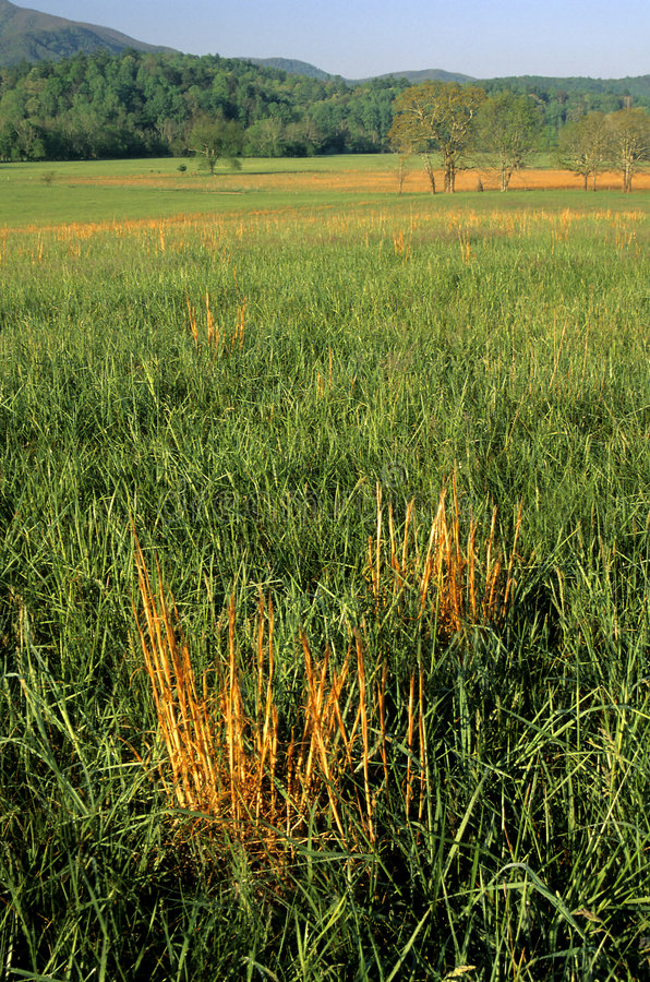 Download Frühlings-Landschaft, Feld, Cades Bucht Stockbild - Bild von appalachia, landschaft: 46423