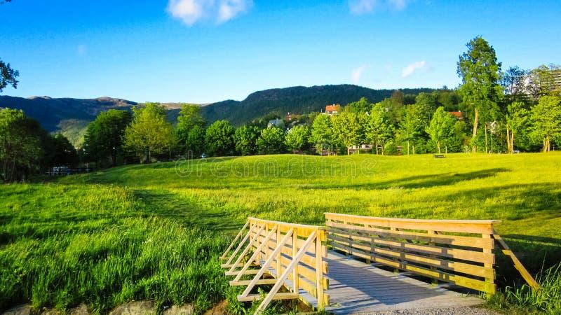 Frühlings-Landschaft mit einer Holzbrücke, einer Wiese von gelben Butterblumeen und grünen Bäumen im Sonnenschein lizenzfreie stockfotos
