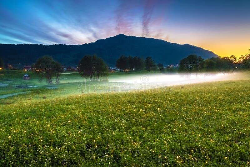 Frühlings-Landschaft mit einer Wiese von gelben Butterblumeen, Bäume bedeckte im Nebel und im Berg in der Dämmerung stockbilder