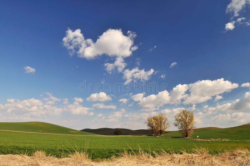 Frühlings-Landschaftszene in Colfax lizenzfreie stockbilder