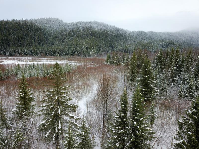Frühlings-Nebenfluss in Alaska stockbild