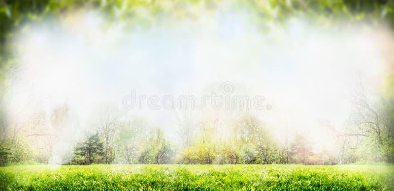 Frühlings- oder Sommernaturhintergrund mit Bäumen und Rasen stockbild